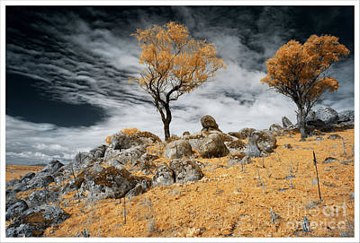 Photograph - Trees and Rocks 4 by Russell Brown
