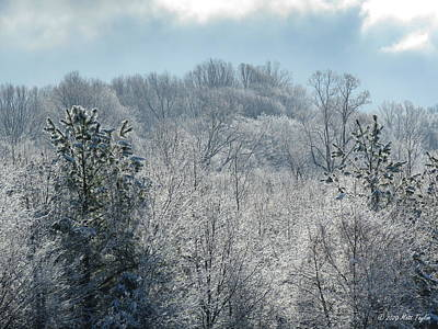 Photograph - Trees Coated With Beautiful Snow by Matt Taylor