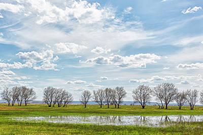 Safari - Trees in a Farm Field by Belinda Greb