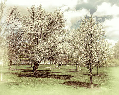 Wild And Wacky Portraits - Trees in Bloom by Alan Toepfer