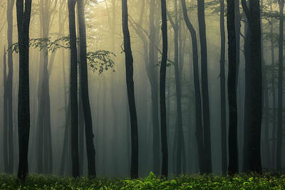 Everett Collection - Trees In Dark Forest by Evgeni Dinev