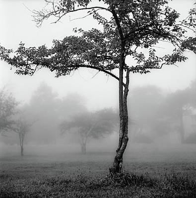 Comedian Drawings Rights Managed Images - Trees in the Mist at Garfield Park Royalty-Free Image by Randall Nyhof
