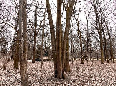 Photograph - Trees in Tiergarten Berlin by Sean Patrick Durham