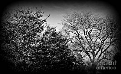 Frank J Casella Royalty-Free and Rights-Managed Images - Trees Late Autumn Golden Hour by Frank J Casella