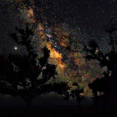 Car Photos Douglas Pittman - Trees Silhouetted by the Milky Way - Harkers Island North Caroli by Bob Decker