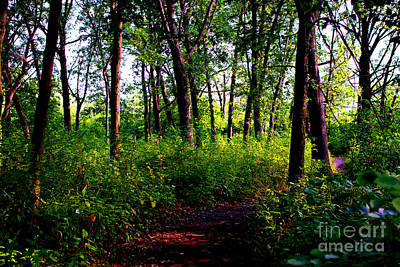 Frank J Casella Royalty-Free and Rights-Managed Images - Trees Through the Forest - Bold by Frank J Casella