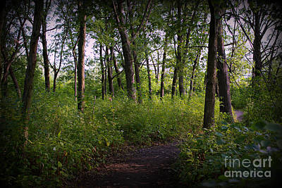 Frank J Casella Royalty-Free and Rights-Managed Images - Trees Through the Forest - Natural by Frank J Casella