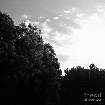 Frank J Casella Royalty-Free and Rights-Managed Images - Treetop Sunrise - Black and White by Frank J Casella