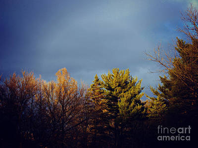 Frank J Casella Royalty-Free and Rights-Managed Images - Treetops Late Winter Evening Sun by Frank J Casella