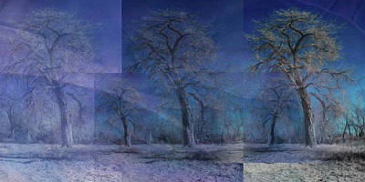 Photograph - Tres Trees Trois by Mike Braun
