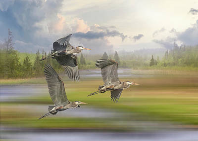 Animals Royalty-Free and Rights-Managed Images - Trio of Great Blue Herons in Flight  - Breaking Storm by Patti Deters