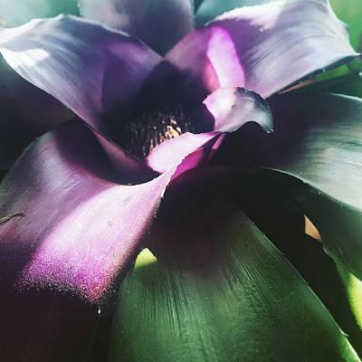 Photograph - Tropical  by Michelle Hoffmann