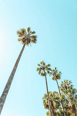 Royalty-Free and Rights-Managed Images - Tropical Palm Trees, Palm Tree Leaf, California Dream, Miami Beach, Summer Travel, Beach Photography by Radu Bercan