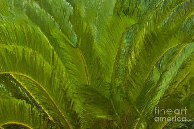 Painting - Tropical Sago Palm by Dale Powell
