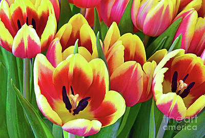 Steampunk - Tulip Grouping  in Red Yellow and Green by Regina Geoghan
