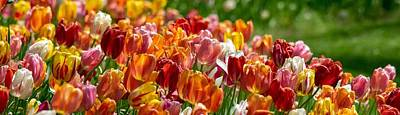 Marvelous Marble - Tulip Panorama by Mary Ann Artz