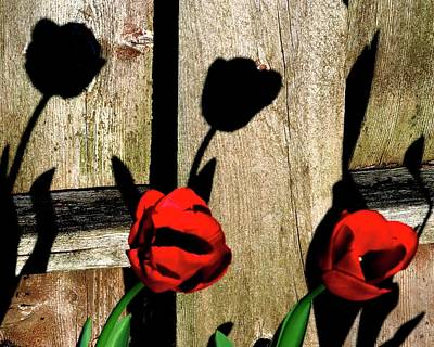 Jerry Sodorff Royalty-Free and Rights-Managed Images - Tulip Shadows by Jerry Sodorff