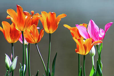 Pittsburgh According To Ron Magnes - Tulip Sunshine by Mary Ann Artz