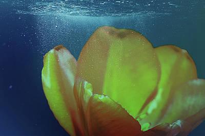 Grateful Dead - Tulip Underwater by Johanna Hurmerinta