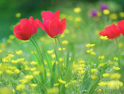 Bringing The Outdoors In - Tulips and Buttercups by Ava Reaves