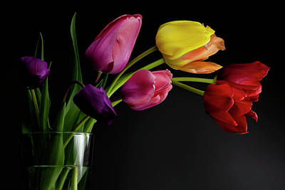 Photograph - Tulips in a vase with dramatic lighting and dark background by Art Whitton
