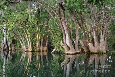 Polaroid Camera - Tupelo trees. Rainbow River, Dunnellon, FL by Patrick Lynch