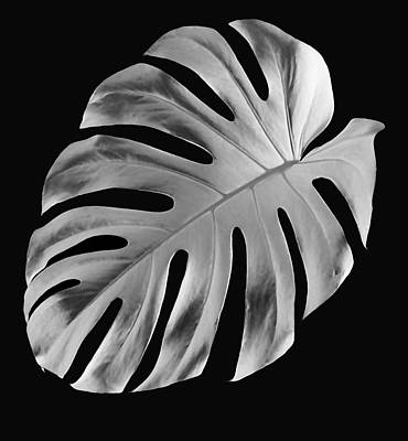 On Trend At The Pool - Turning Over A New Leaf by Marvin Blaine