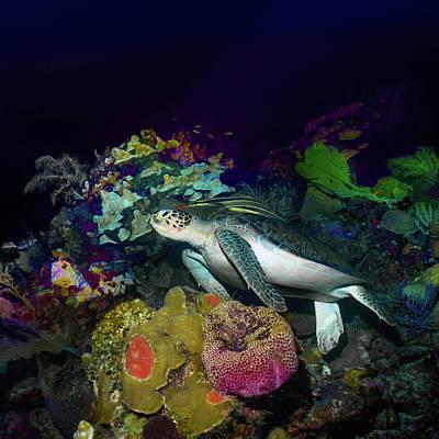 Photograph - Turtle by Monique Taree