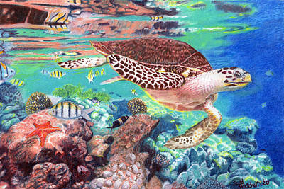 Animals Drawings - Turtle on the Reef by Todd Hatchett