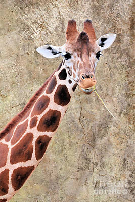 Anne Geddes Collection - Twiggy The Giraffe by Diann Fisher