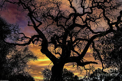 Ethereal - Twisted Oak Tree Sunset by Mitch Shindelbower