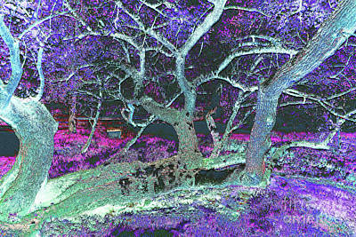Surrealism Royalty Free Images - Twisted Tree in Purple Field Royalty-Free Image by Bentley Davis