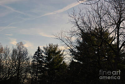 Frank J Casella Royalty-Free and Rights-Managed Images - Twisting Lines Morning Sunlight by Frank J Casella