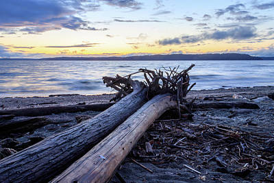 Vermeer Rights Managed Images - Two Driftwood Logs At Sunset Royalty-Free Image by Taya Johnston
