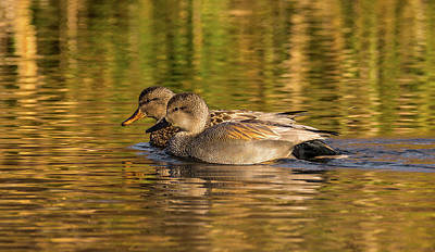 Classical Masterpiece Still Life Paintings - Two Gadwalls by Marv Vandehey
