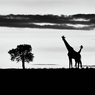 Watercolor Butterflies - Two giraffes at sunrise - monochrome by Murray Rudd