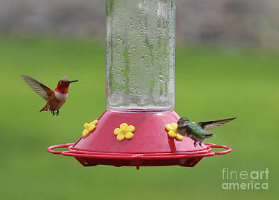 Advertising Archives - Two Hummingbirds Getting Along by Carol Groenen