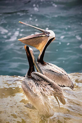 Moody Trees - Two Pelicans Close Up by Gail Salter