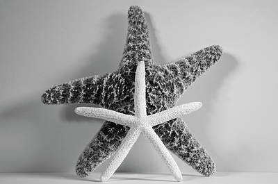 Royalty-Free and Rights-Managed Images - Two Starfish by Angie Tirado