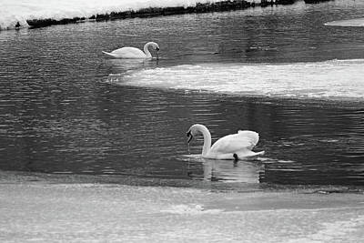 1920s Flapper Girl - Two Swans And Ice by Robert Tubesing