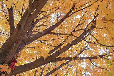 New Years - Under a Golden Maple by Bentley Davis