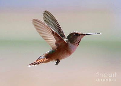 Abstract Stripe Patterns - Uplifting Hummingbird by Carol Groenen