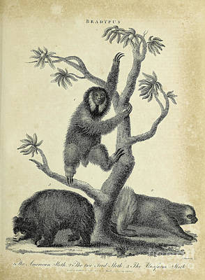 Animals Drawings - Various Sloths h1 by Historic illustrations
