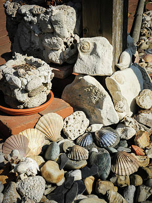 Photograph - Various stones and shells lying on the ground by Stefan Rotter
