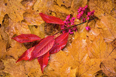 Photograph - Vibrant, Brown, Yellow Autumn Maple Tree Leaves by Robert Pastryk