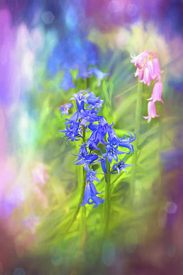 Abstract Graphics Rights Managed Images - Vibrant Woodland Bluebells  Royalty-Free Image by Carol Japp
