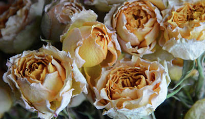 Achieving Royalty Free Images - Victorian Roses Royalty-Free Image by Whispering Peaks Photography