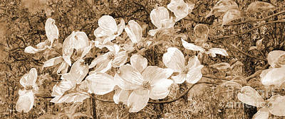 Catch Of The Day - View Beyond Dogwood-flowering dogwood sepia tone by Hailey E Herrera