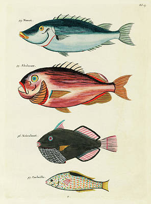 Surrealism Royalty-Free and Rights-Managed Images - Vintage, Whimsical Fish and Marine Life Illustration by Louis Renard - Abaleeuw, Naouti, Kokenbouti by Louis Renard