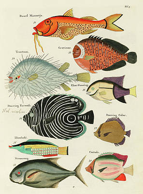 Animals Digital Art - Vintage, Whimsical Fish and Marine Life Illustration by Louis Renard - Baard Mannetje, Formosa by Louis Renard